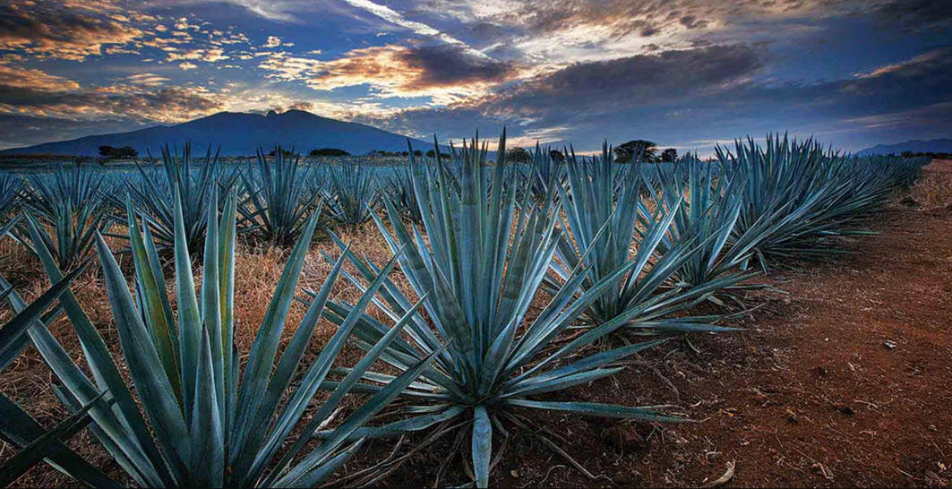текила. 100 percent blue agave, Mixto